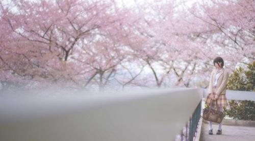 校园短发眼镜娘美女樱花下清纯白丝萌妹少女养眼图片_WWW.66152.COM