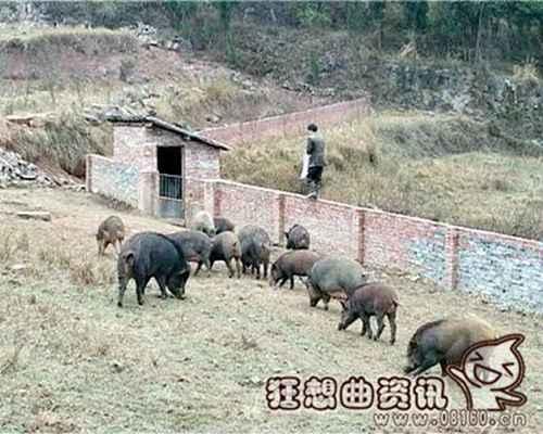 养野猪的成本和利润如何?_WWW.66152.COM