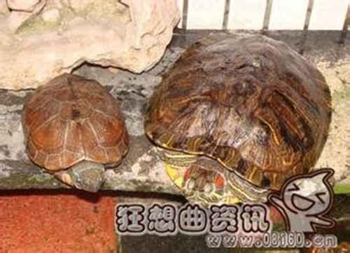 王八和乌龟有什么区别_WWW.66152.COM