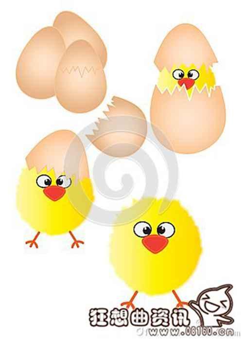小鸡是怎样孵出来的?_WWW.66152.COM
