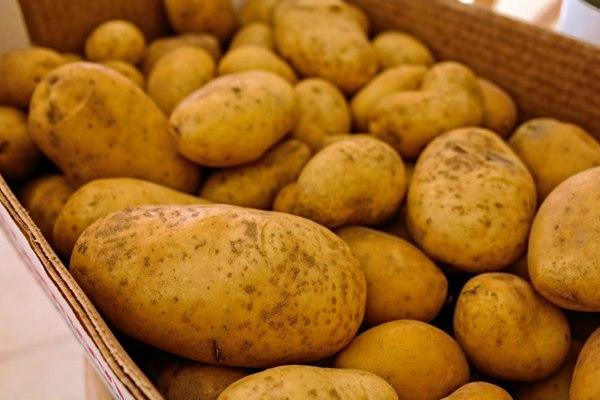 新鲜的土豆图片_WWW.66152.COM