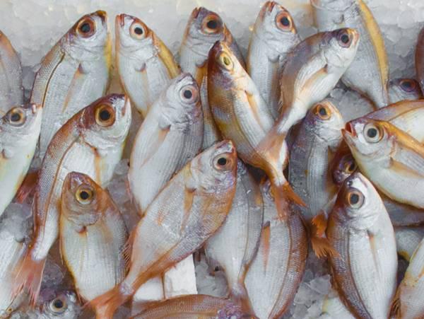 新鲜的鱼图片_WWW.66152.COM