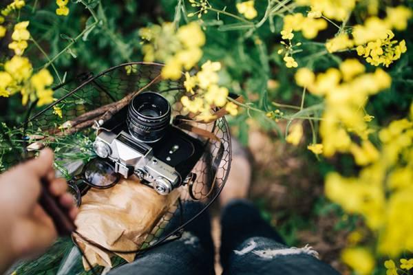花园里的复古相机图片_WWW.66152.COM