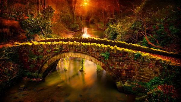树林里的拱桥图片_WWW.66152.COM