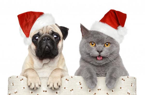 小狗小猫过圣诞节图片_WWW.66152.COM