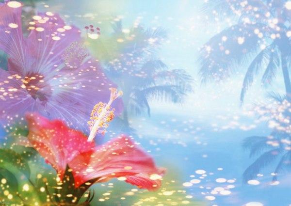 鲜花季节之夏图片_WWW.66152.COM