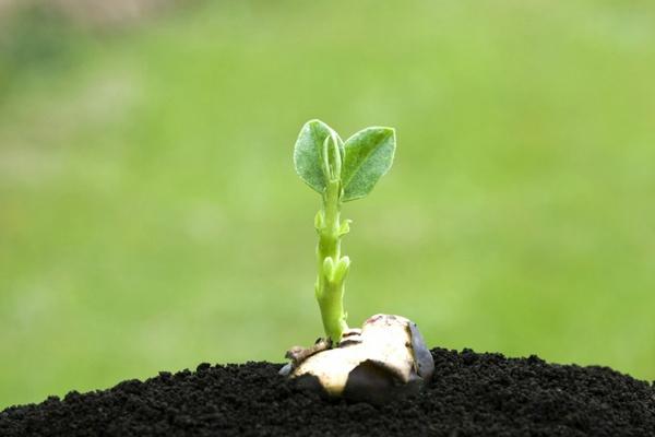 寓意生命的绿色新芽图片_WWW.66152.COM