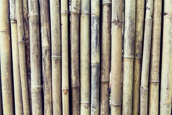 成排的竹子背景素材图片_WWW.66152.COM