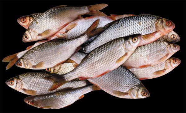 鱼类png透明背景素材图片_WWW.66152.COM