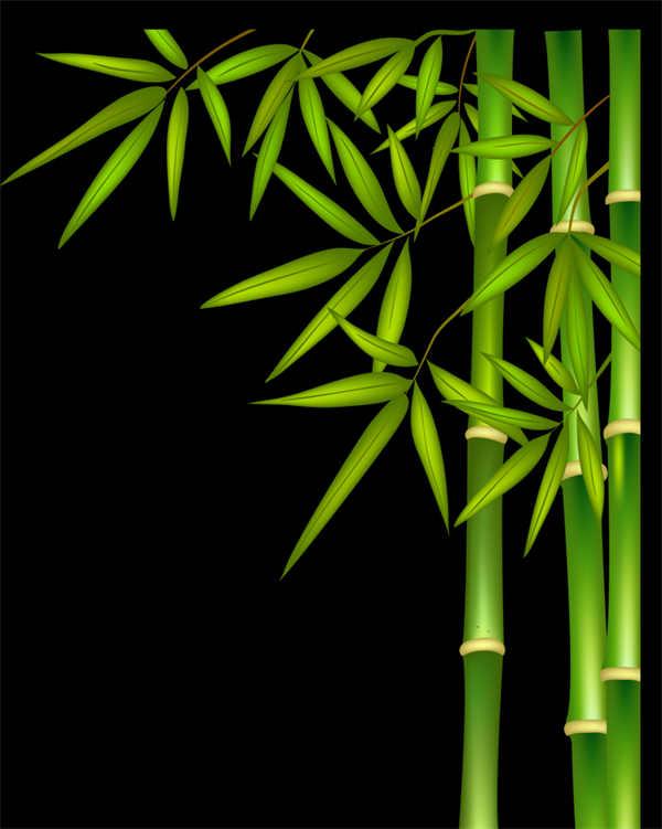竹子png透明背景素材图片_WWW.66152.COM