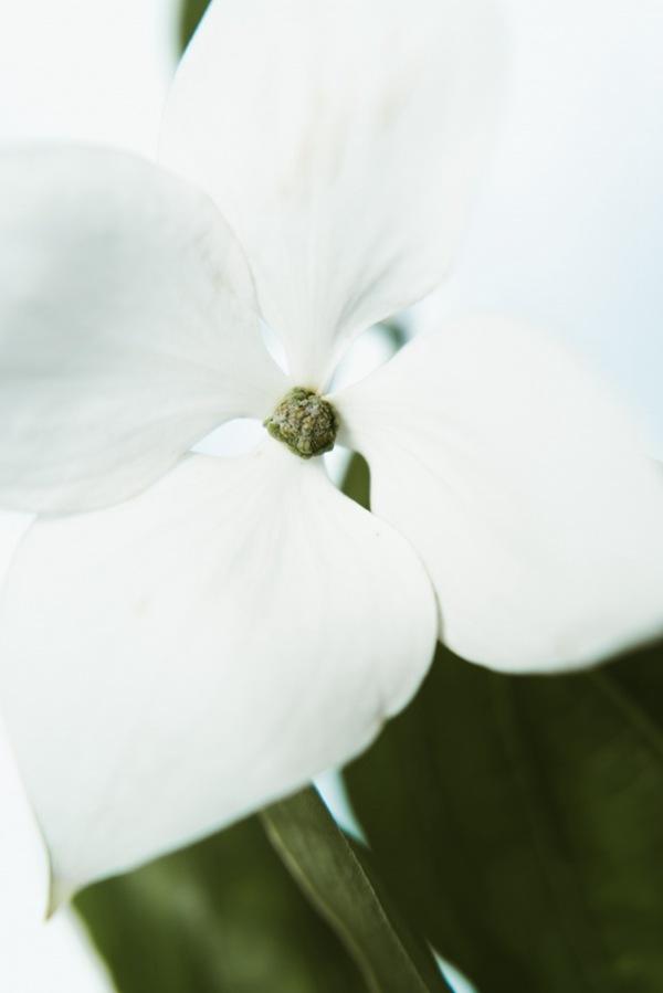 梦幻花朵艺术摄影图片_WWW.66152.COM