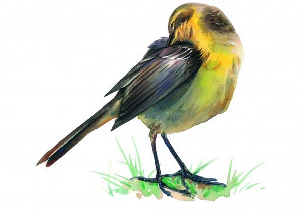 各种彩绘鸟类图片_WWW.66152.COM