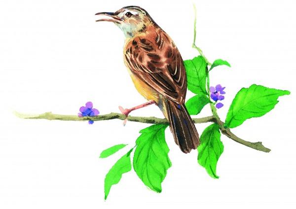 彩绘各种鸟类图片_WWW.66152.COM