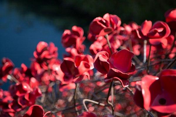 铁艺红色罂粟花图片_WWW.66152.COM