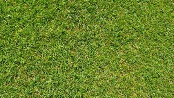 人工草坪图片_WWW.66152.COM