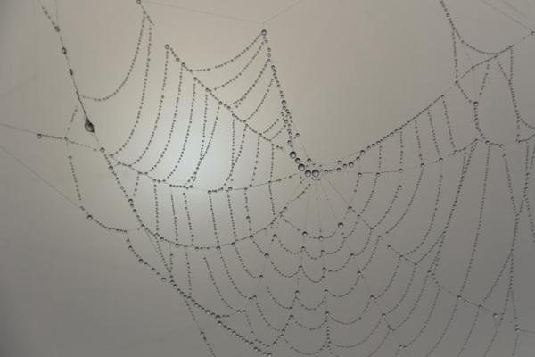 带水珠的蜘蛛网图片_WWW.66152.COM