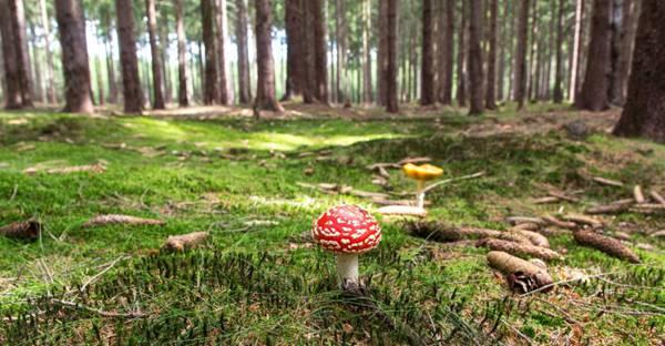 有毒的蘑菇图片_WWW.66152.COM