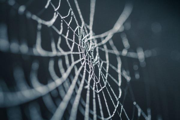 蜘蛛网高清图片_WWW.66152.COM