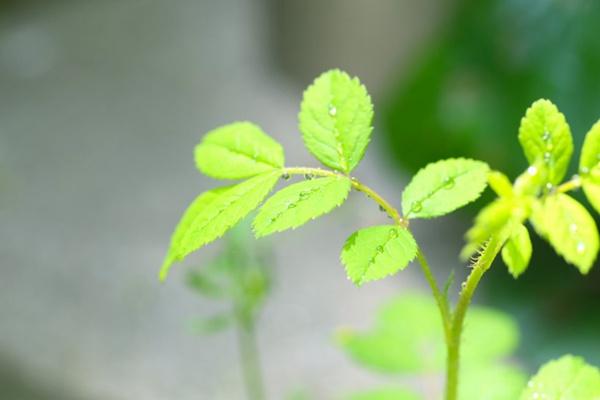 绿叶上的水滴图片_WWW.66152.COM