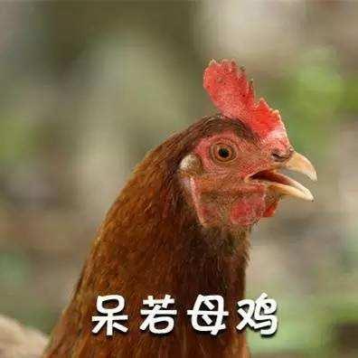 安静如鸡是什么意思_WWW.66152.COM