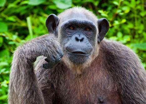 动物思维之谜 动物真的有思维吗_WWW.66152.COM