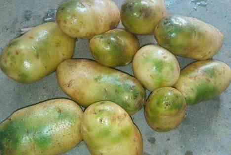 土豆变绿为什么不能吃_WWW.66152.COM