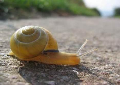世界上最小陆生蜗牛_WWW.66152.COM