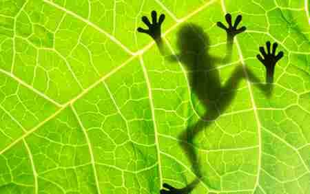 青蛙是怎么睡觉的 青蛙的特点和本领是什么_WWW.66152.COM
