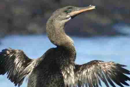 岛屿上一般有什么动物_WWW.66152.COM