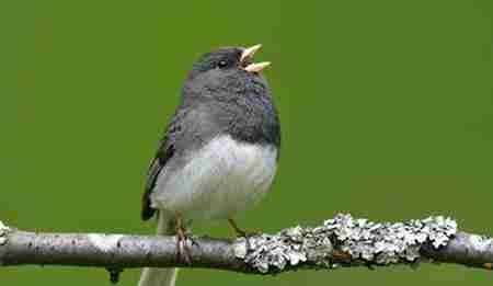 表面温顺却凶猛的鸟类_WWW.66152.COM