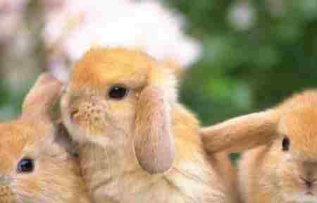 十大有趣的动物行为_WWW.66152.COM