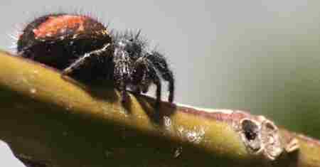 外表可爱的十大危险动物_WWW.66152.COM