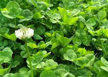 心形叶子的植物有哪些_WWW.66152.COM