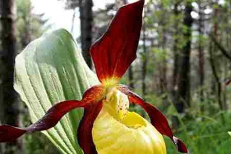 世界十种不同寻常的植物_WWW.66152.COM