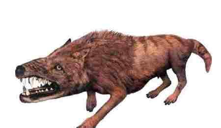 神龙架驴头狼的真实图片_WWW.66152.COM
