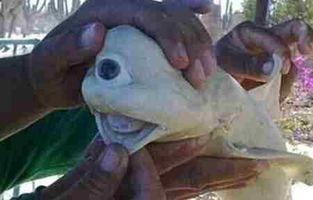 美国罕见的独眼鲨鱼_WWW.66152.COM