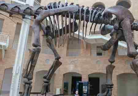 史上最大的恐龙_WWW.66152.COM
