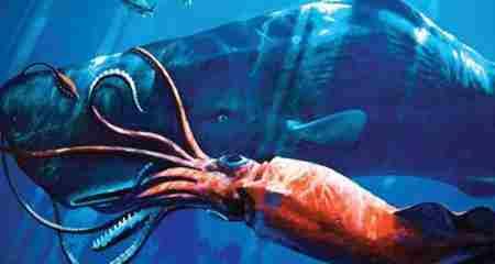 抹香鲸和大王乌贼图片_WWW.66152.COM
