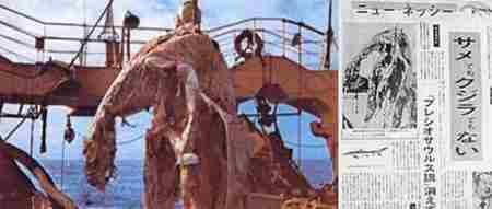 日本1977年海怪尸体事件_WWW.66152.COM