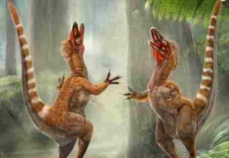 中华龙鸟化石之谜,_WWW.66152.COM
