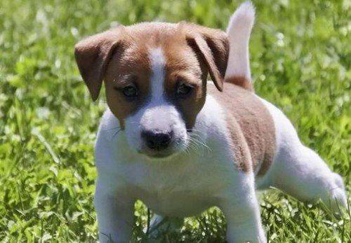 世界上速度最快的狗_WWW.66152.COM
