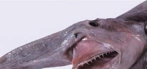 最古老的鲨鱼图片_WWW.66152.COM