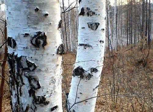 世界上最硬的树比钢铁还要硬一倍_WWW.66152.COM