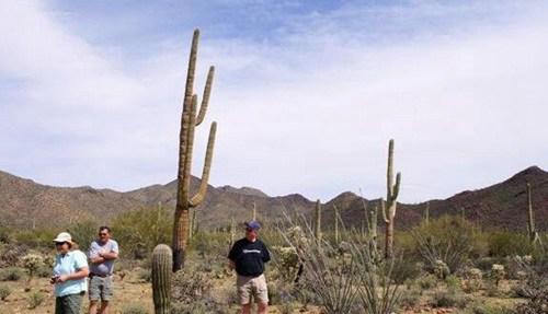 世界上最高的仙人掌最高可达20米_WWW.66152.COM