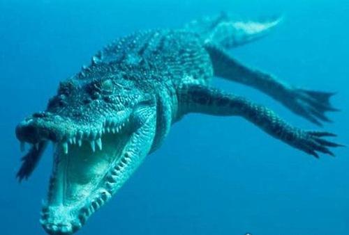 世界上最长的鳄鱼长到10米_WWW.66152.COM