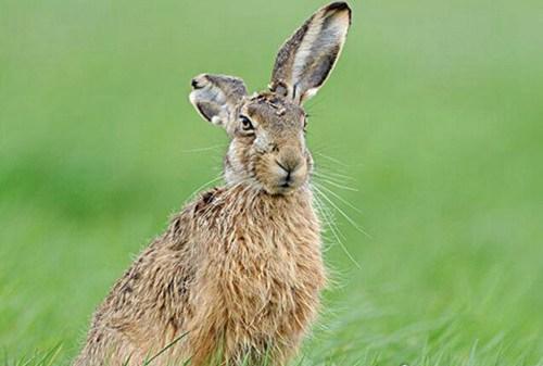 世界上速度最快的兔子_WWW.66152.COM