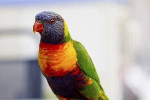 世界上寿命最长的鸟_WWW.66152.COM