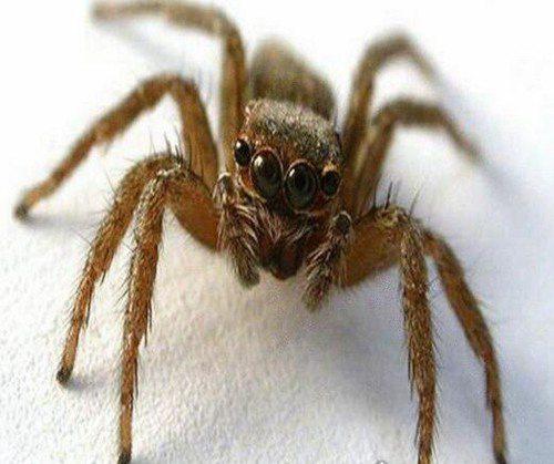世界上最小的蜘蛛_WWW.66152.COM