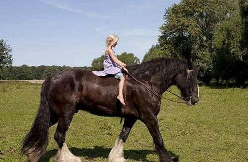 世界上最大的马体重超过1.2吨_WWW.66152.COM