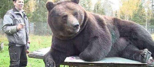 现今最大的熊是什么熊_WWW.66152.COM